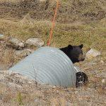 Onze eerste beer