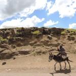De ezel als transportmiddel